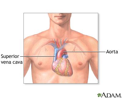 health search, Human body